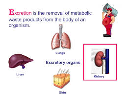 Taking out the Trash! Organs of excretion